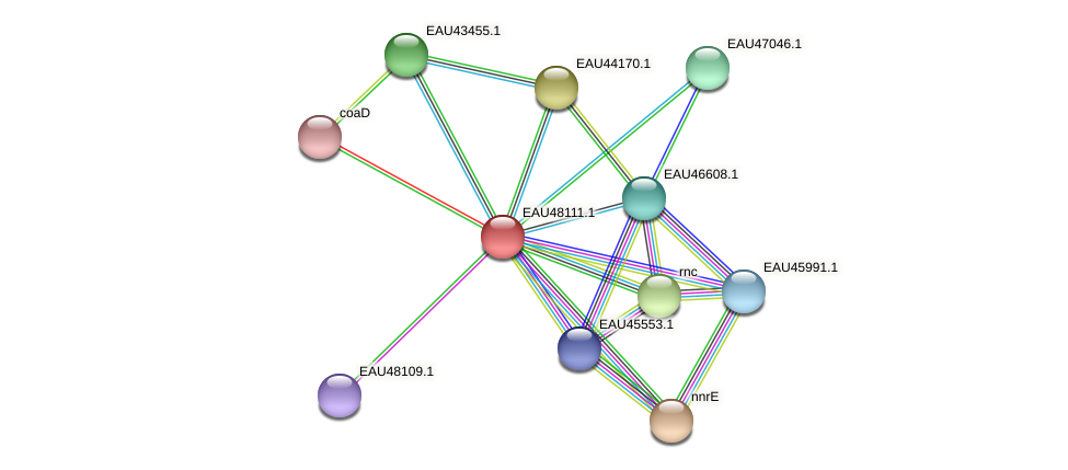R2601_14135 protein (Pelagibaca bermudensis) - STRING interaction network