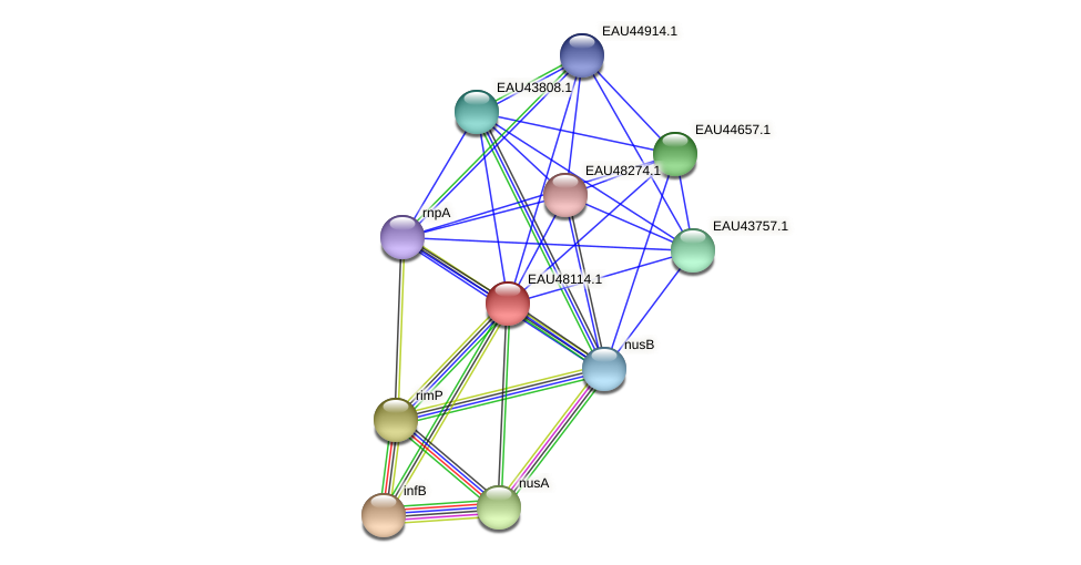 R2601_14150 protein (Pelagibaca bermudensis) - STRING interaction network