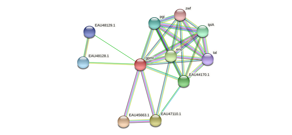 gpmI protein (Pelagibaca bermudensis) - STRING interaction network