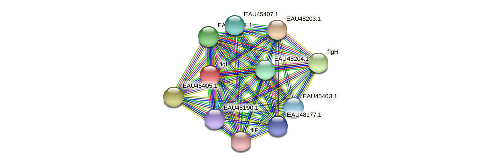 R2601_14585 protein (Pelagibaca bermudensis) - STRING interaction network