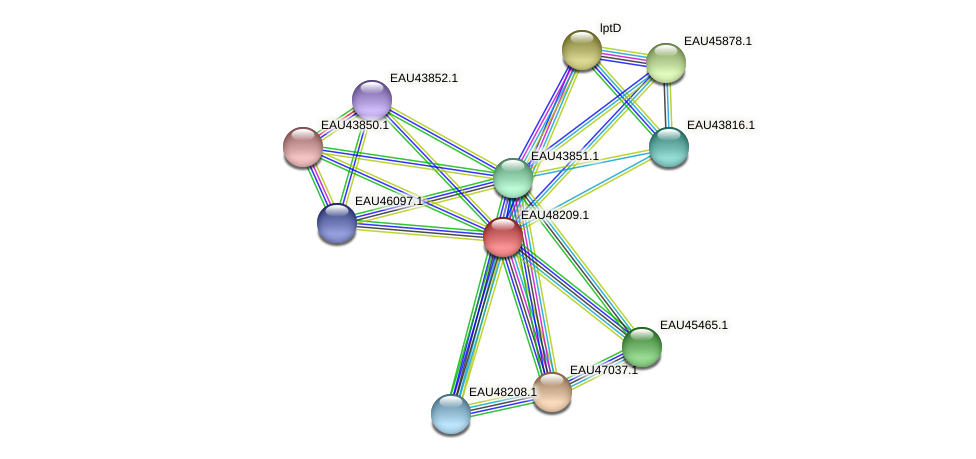 R2601_14625 protein (Pelagibaca bermudensis) - STRING interaction network