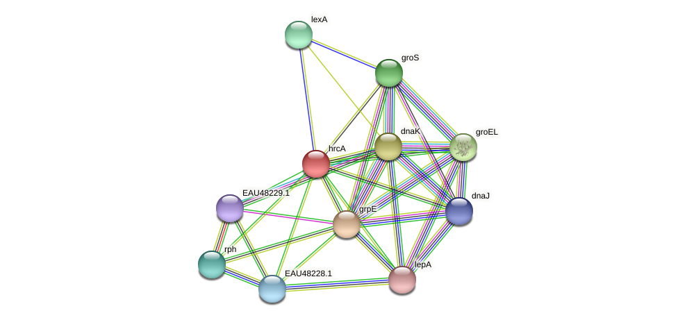 hrcA protein (Pelagibaca bermudensis) - STRING interaction network