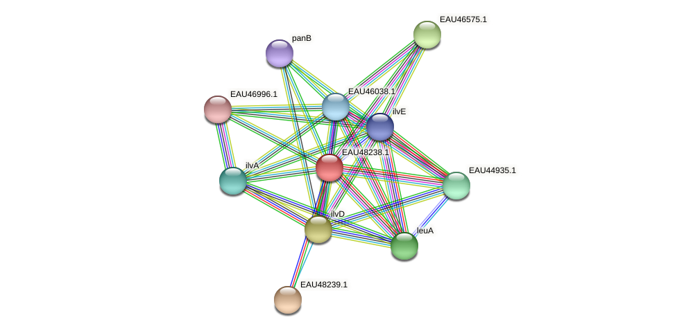 R2601_14770 protein (Pelagibaca bermudensis) - STRING interaction network