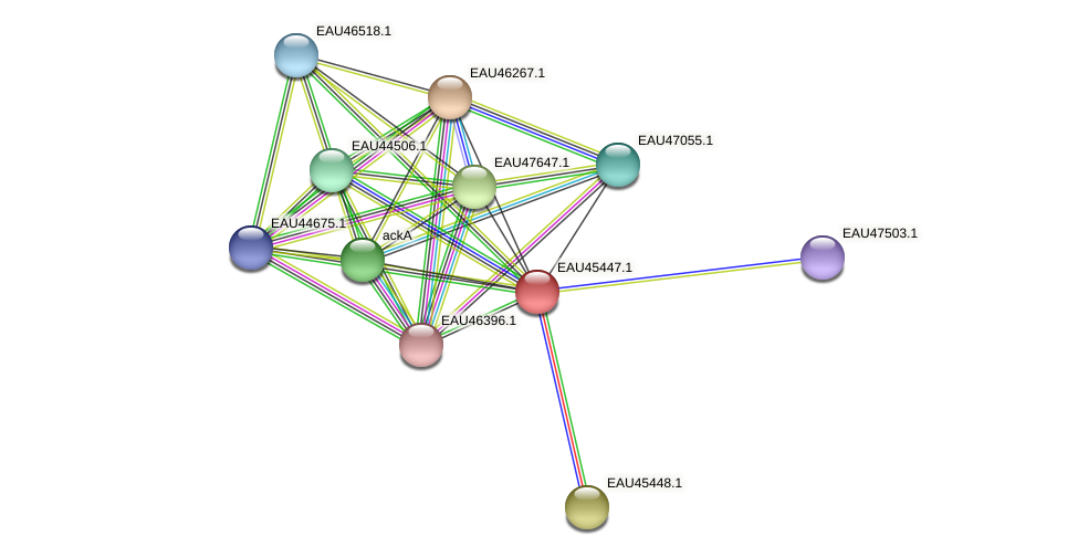 R2601_15025 protein (Pelagibaca bermudensis) - STRING interaction network