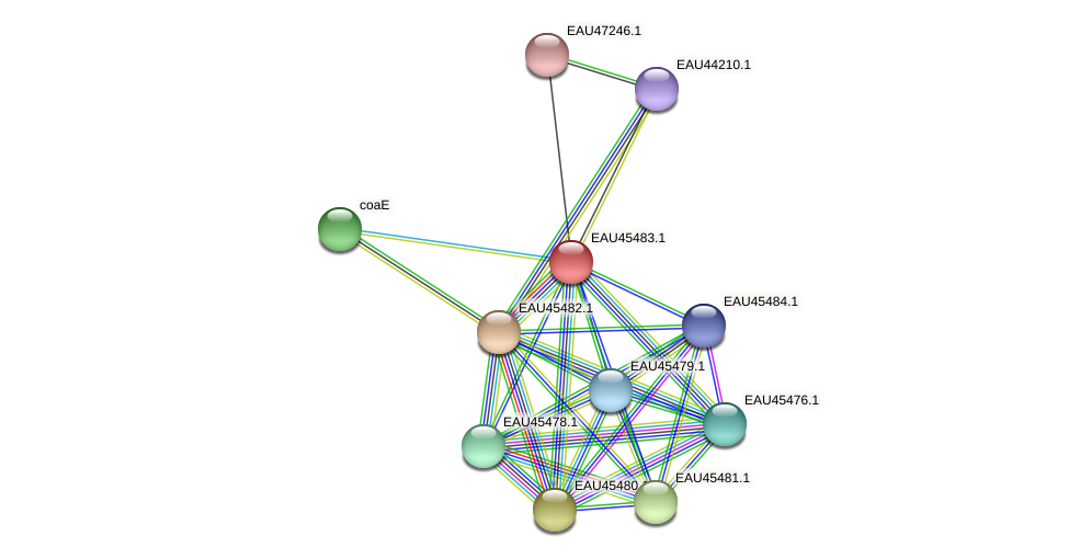 R2601_15205 protein (Pelagibaca bermudensis) - STRING interaction network