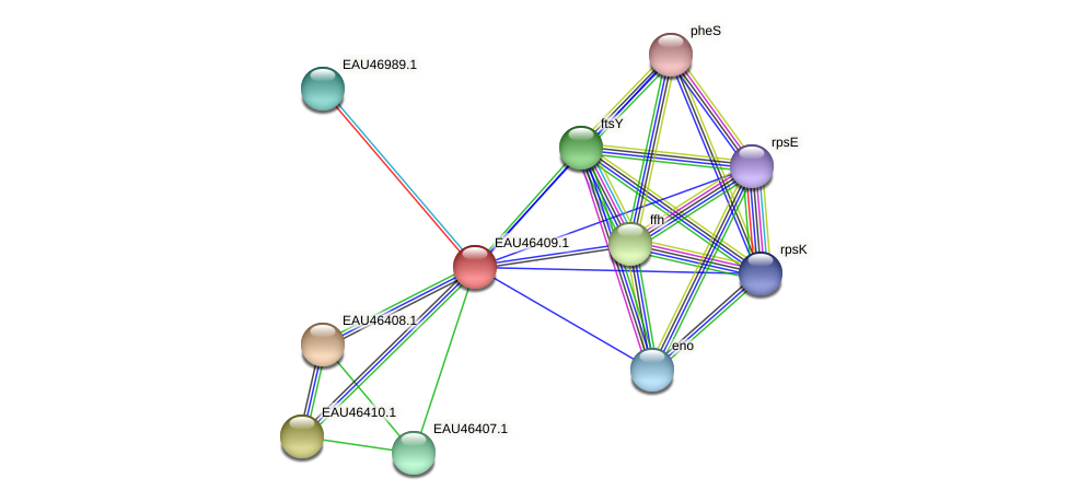 R2601_15297 protein (Pelagibaca bermudensis) - STRING interaction network