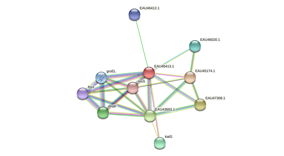 R2601_15317 protein (Pelagibaca bermudensis) - STRING interaction network