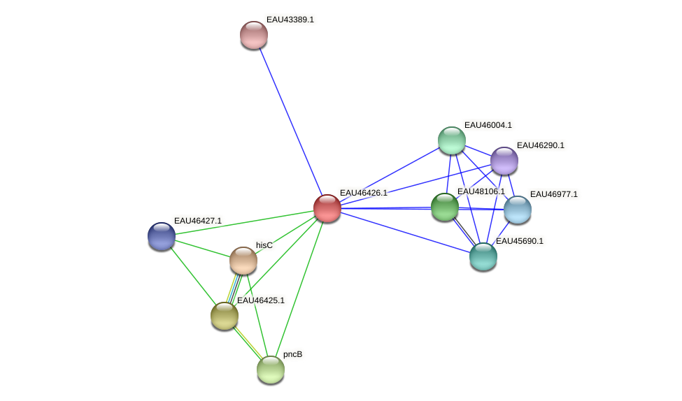 R2601_15382 protein (Pelagibaca bermudensis) - STRING interaction network