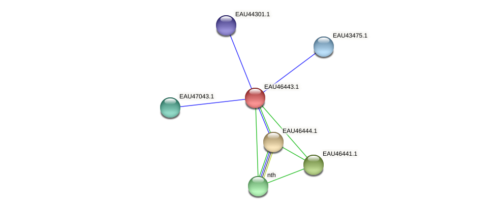 R2601_15467 protein (Pelagibaca bermudensis) - STRING interaction network