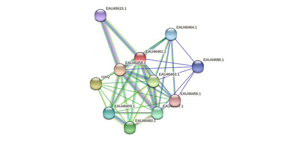 R2601_15557 protein (Pelagibaca bermudensis) - STRING interaction network