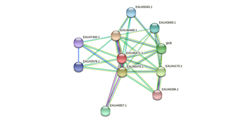 R2601_15607 protein (Pelagibaca bermudensis) - STRING interaction network
