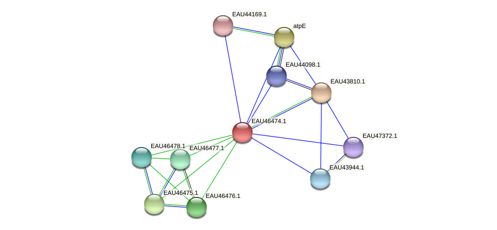 R2601_15622 protein (Pelagibaca bermudensis) - STRING interaction network
