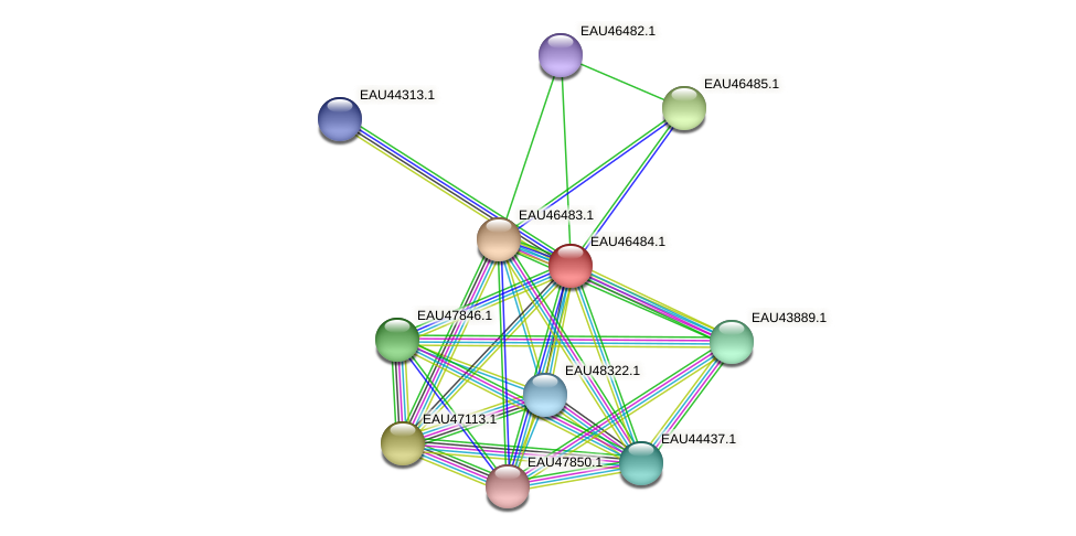 R2601_15672 protein (Pelagibaca bermudensis) - STRING interaction network