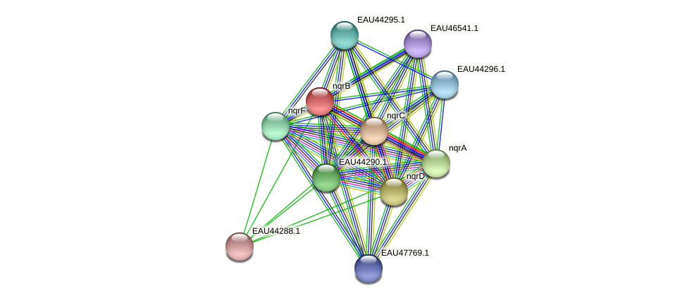 nqrB protein (Pelagibaca bermudensis) - STRING interaction network