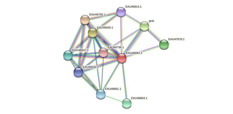 R2601_16115 protein (Pelagibaca bermudensis) - STRING interaction network