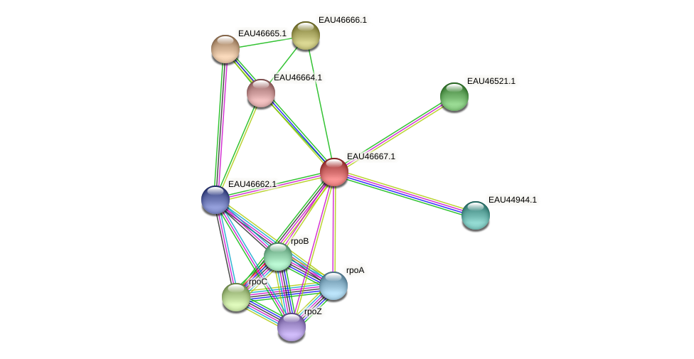 R2601_16140 protein (Pelagibaca bermudensis) - STRING interaction network