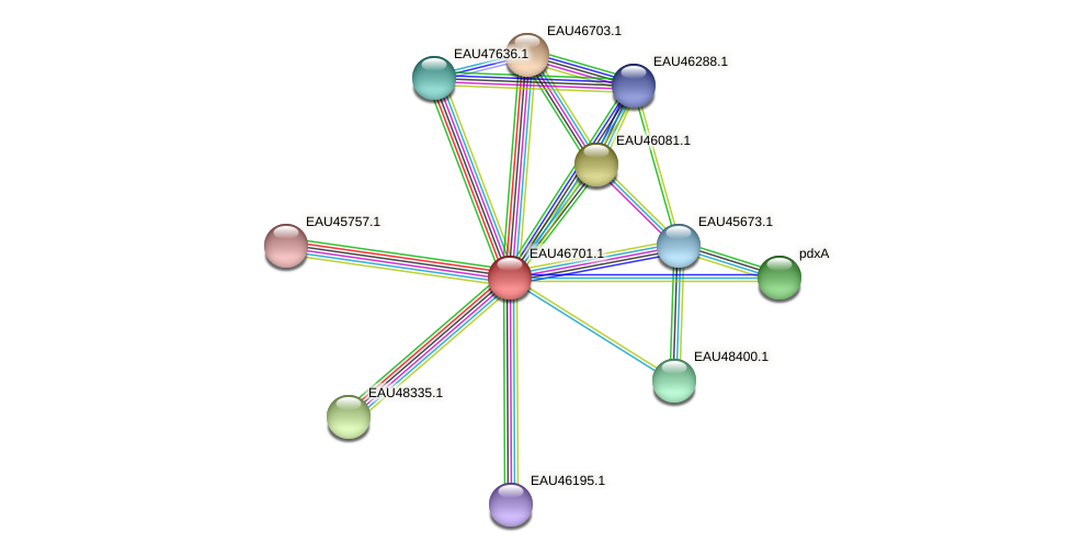 R2601_16310 protein (Pelagibaca bermudensis) - STRING interaction network