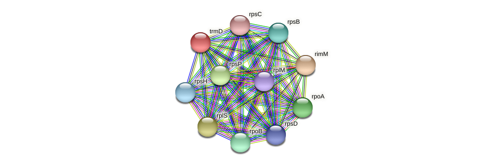 trmD protein (Pelagibaca bermudensis) - STRING interaction network