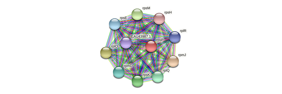 rpsP protein (Pelagibaca bermudensis) - STRING interaction network