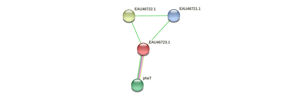 R2601_16420 protein (Pelagibaca bermudensis) - STRING interaction network