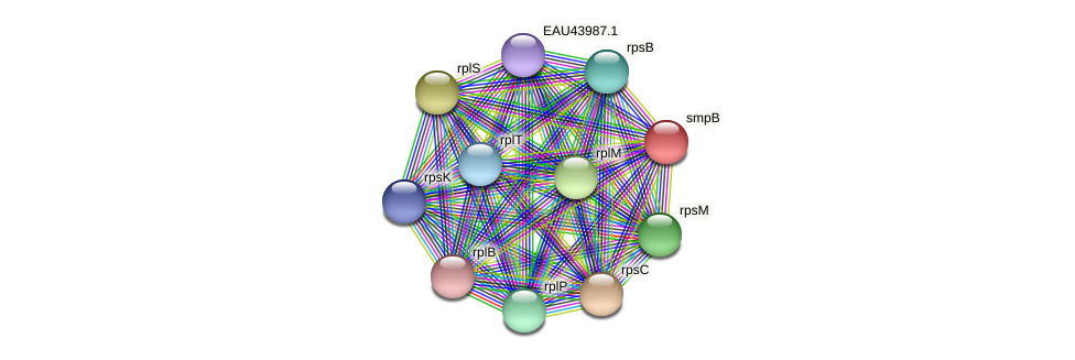smpB protein (Pelagibaca bermudensis) - STRING interaction network