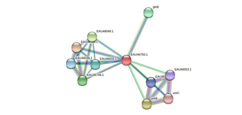 R2601_16555 protein (Pelagibaca bermudensis) - STRING interaction network