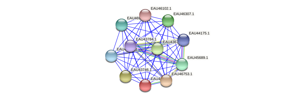 R2601_16565 protein (Pelagibaca bermudensis) - STRING interaction network