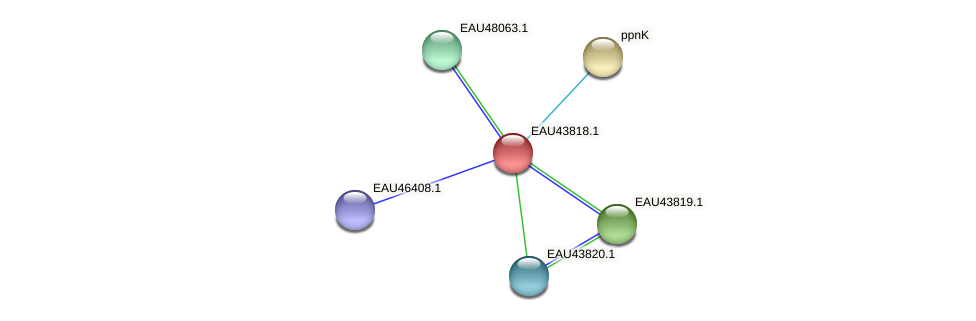 R2601_16755 protein (Pelagibaca bermudensis) - STRING interaction network