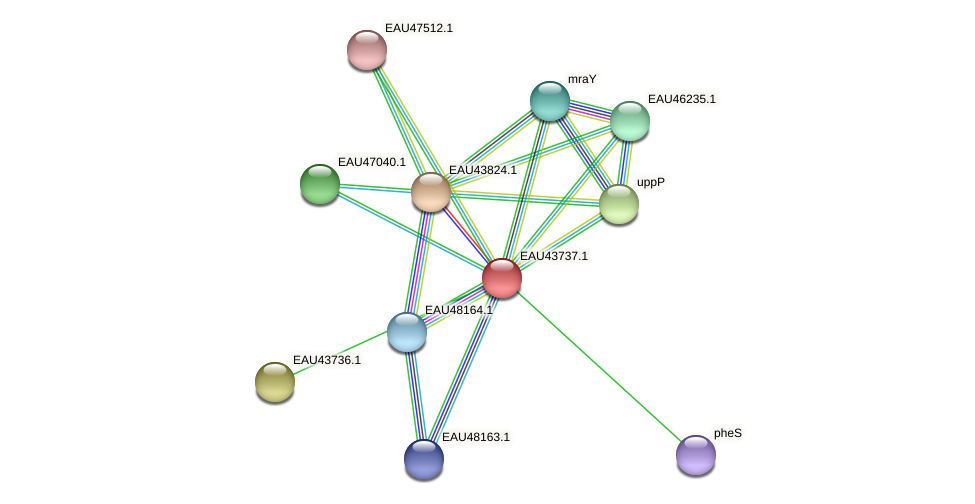 R2601_16800 protein (Pelagibaca bermudensis) - STRING interaction network