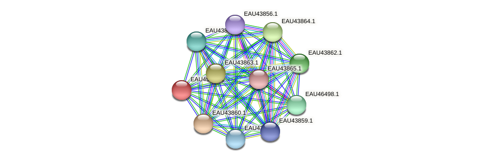 R2601_17052 protein (Pelagibaca bermudensis) - STRING interaction network