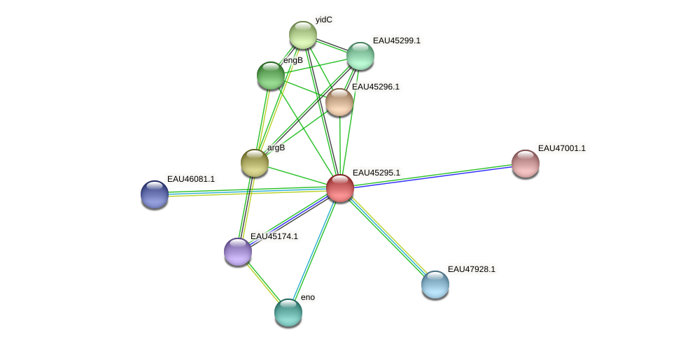 R2601_17197 protein (Pelagibaca bermudensis) - STRING interaction network