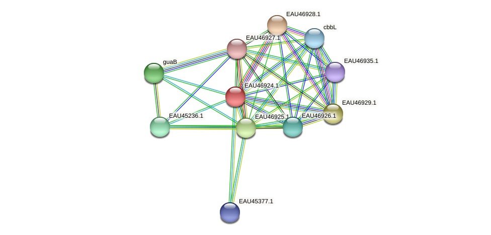 R2601_17359 protein (Pelagibaca bermudensis) - STRING interaction network