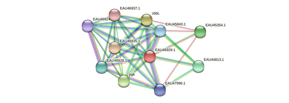 R2601_17384 protein (Pelagibaca bermudensis) - STRING interaction network