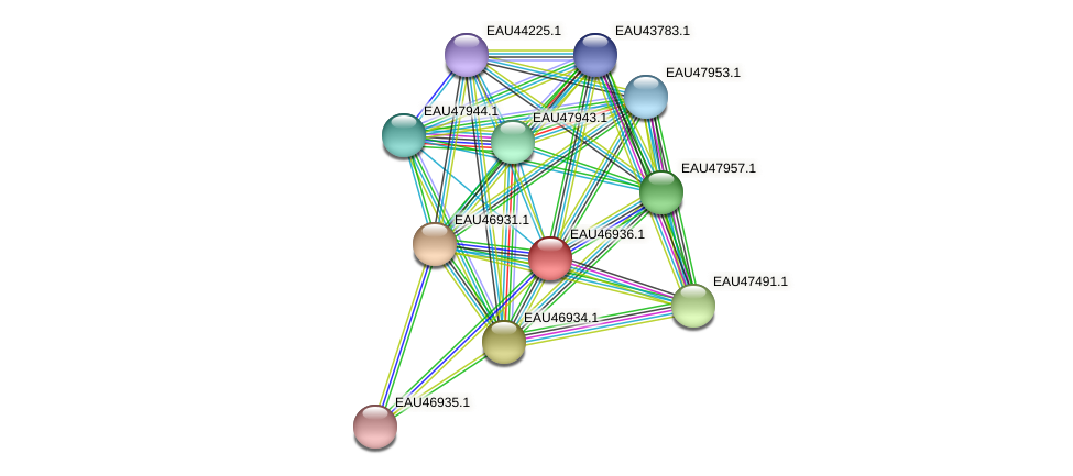 R2601_17419 protein (Pelagibaca bermudensis) - STRING interaction network