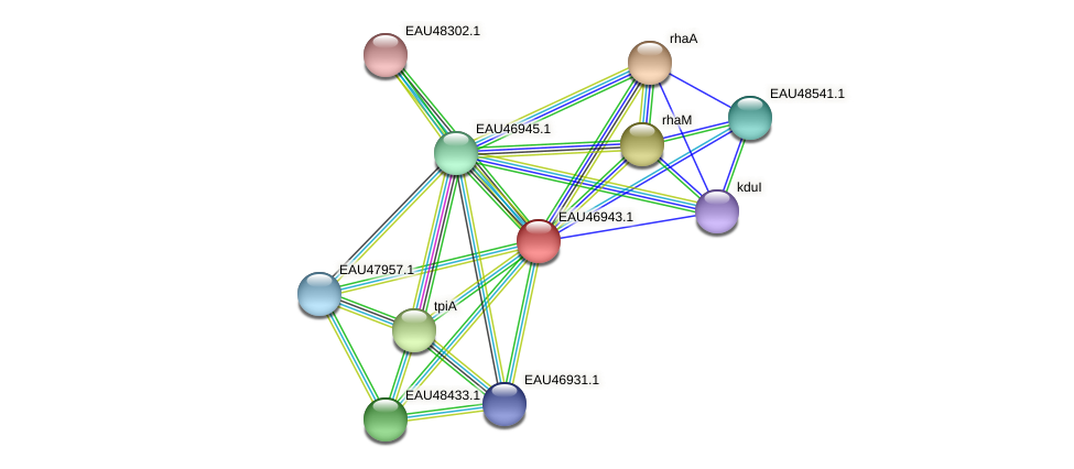 R2601_17454 protein (Pelagibaca bermudensis) - STRING interaction network