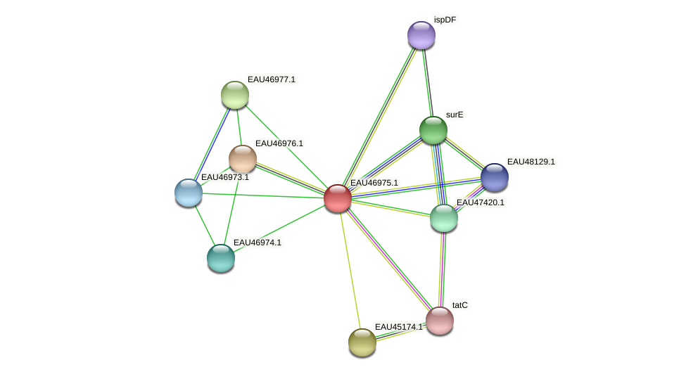 R2601_17614 protein (Pelagibaca bermudensis) - STRING interaction network