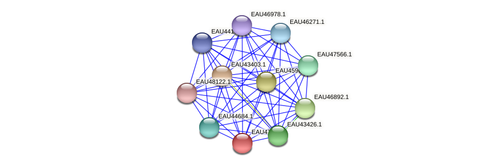 R2601_17849 protein (Pelagibaca bermudensis) - STRING interaction network