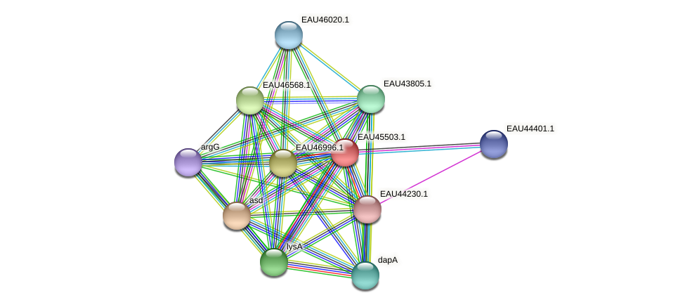 R2601_17913 protein (Pelagibaca bermudensis) - STRING interaction network