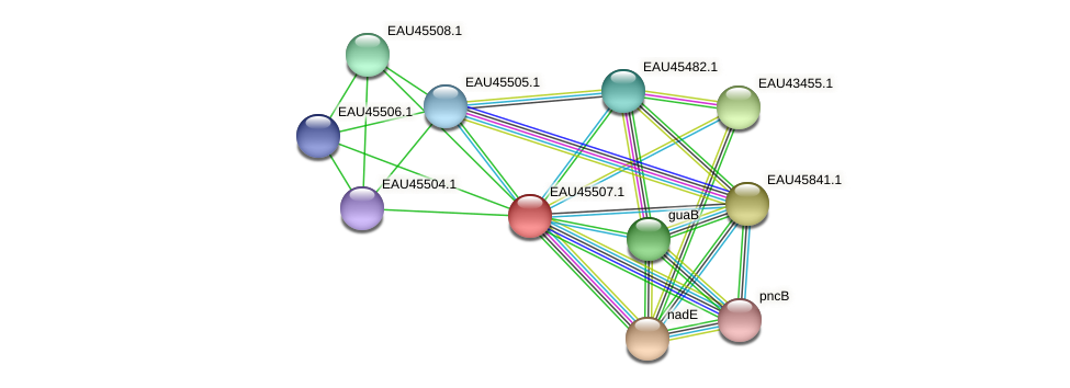 R2601_17933 protein (Pelagibaca bermudensis) - STRING interaction network