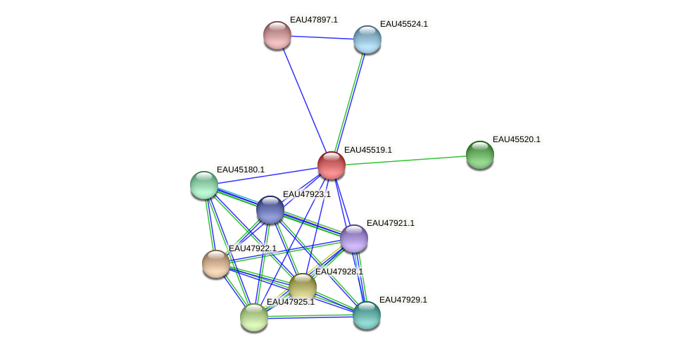 R2601_17993 protein (Pelagibaca bermudensis) - STRING interaction network