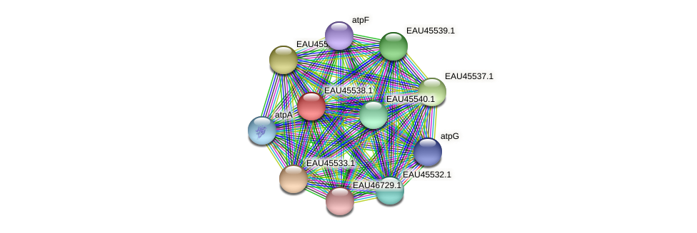 R2601_18088 protein (Pelagibaca bermudensis) - STRING interaction network