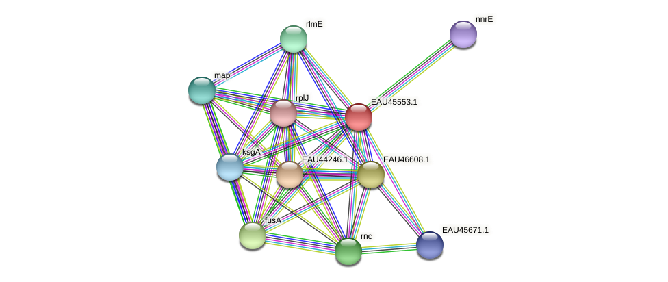 R2601_18163 protein (Pelagibaca bermudensis) - STRING interaction network