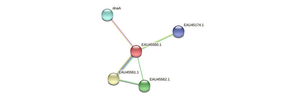 R2601_18198 protein (Pelagibaca bermudensis) - STRING interaction network