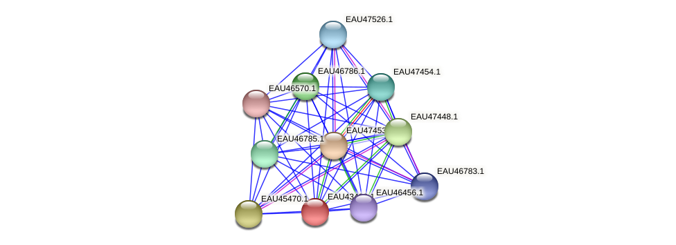 R2601_18293 protein (Pelagibaca bermudensis) - STRING interaction network