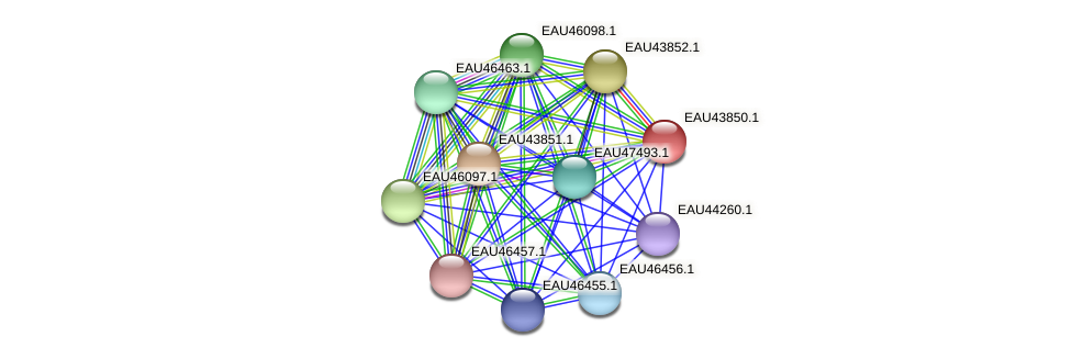 R2601_18323 protein (Pelagibaca bermudensis) - STRING interaction network