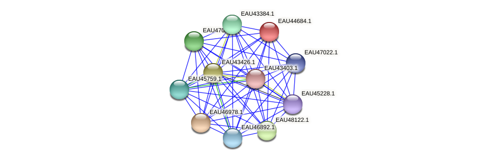 R2601_18558 protein (Pelagibaca bermudensis) - STRING interaction network