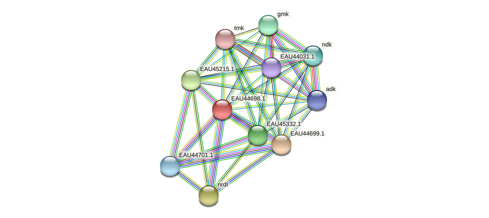 R2601_18628 protein (Pelagibaca bermudensis) - STRING interaction network