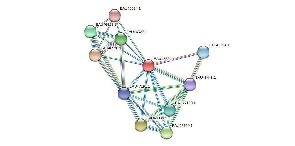 R2601_18755 protein (Pelagibaca bermudensis) - STRING interaction network