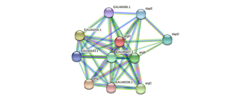 argD protein (Pelagibaca bermudensis) - STRING interaction network
