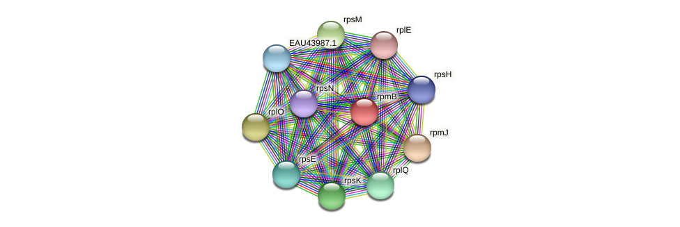 rpmB protein (Pelagibaca bermudensis) - STRING interaction network